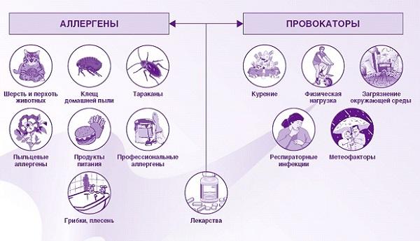 provokatory-allergii